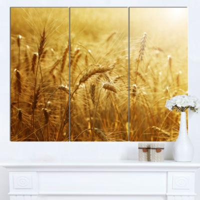Designart Golden Wheat Field Landscape Canvas Art-3 Panels