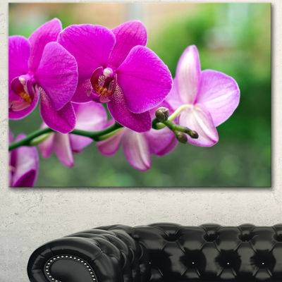 Designart Beautiful Orchid Flowers On Green CanvasArt Print