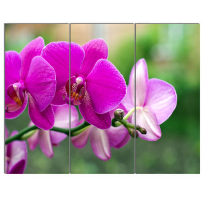 Design Art Beautiful Orchid Flowers On Green Canvas Art Print - 3 Panels