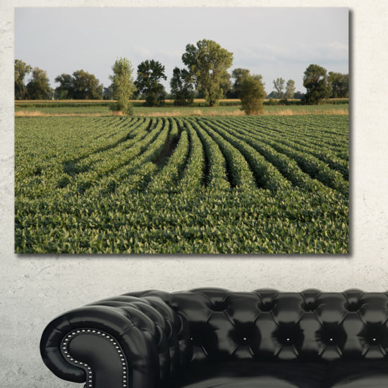 Designart Wisconsin Soybean Field Rows Landscape Wall Art Canvas