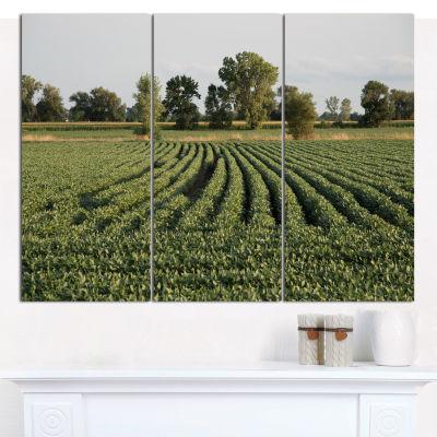 Designart Wisconsin Soybean Field Rows Landscape Wall Art Canvas - 3 Panels
