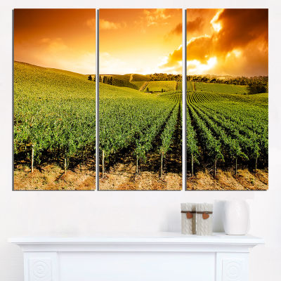 Designart Sunset Vineyard Panorama Wall Art Landscape - 3 Panels
