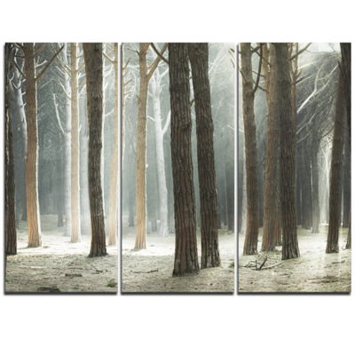 Designart Maritime Pine Tree Forest With Rays Forest Canvas Art - 3 Panels