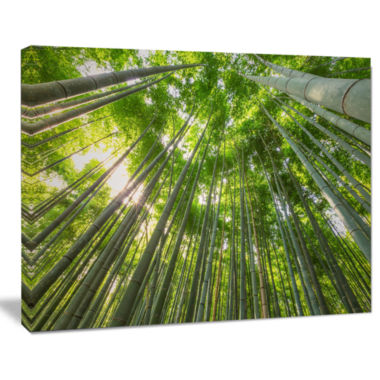 Designart Peaks Of Bamboo In Kyoto Forest Canvas Artwork