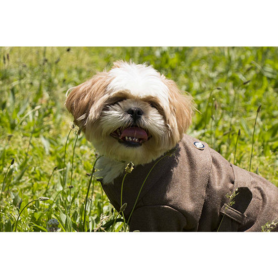 The Pet Life Galore Back-Buckled Fashion Wool Pet Coat