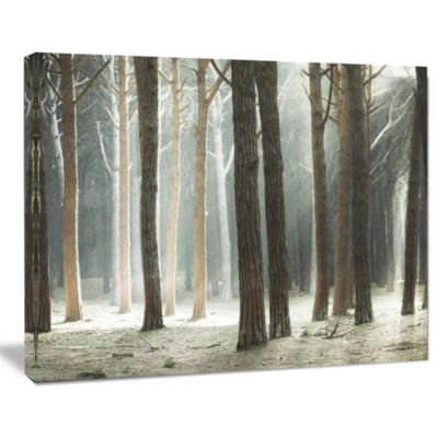 Designart Maritime Pine Tree Forest With Rays Forest Canvas Art
