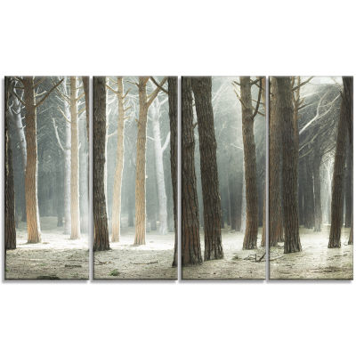 Designart Maritime Pine Tree Forest With Rays Forest Canvas Art - 4 Panels