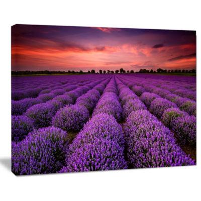 Designart Red Sunset Over Lavender Field Wall ArtLandscape