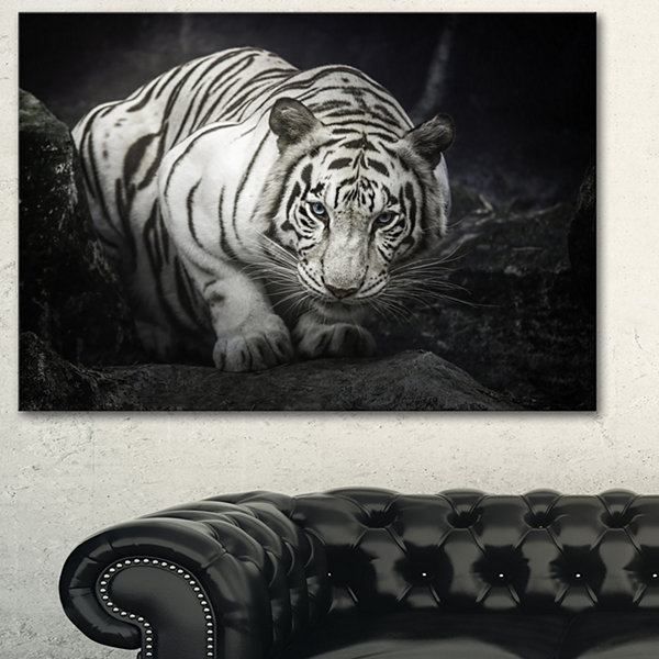 Designart White Tiger Animal Photography Art