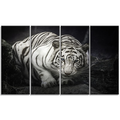 Design Art White Tiger Animal Photography Art - 4 Panels