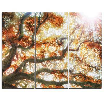 Designart Big Tree Photography Canvas Art Print -3 Panels