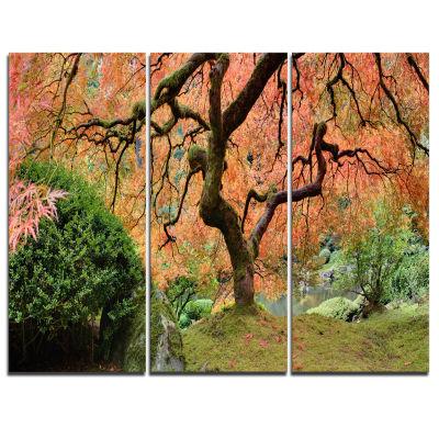 Designart Old Japanese Maple Tree Landscape Photography Canvas Art Print - 3 Panels