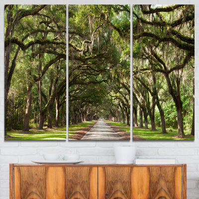 Designart Live Oak Tunnel Photography Canvas Art Print - 3 Panels