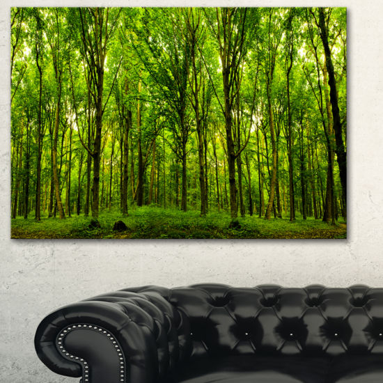 Designart Green Forest Landscape Photo Canvas ArtPrint