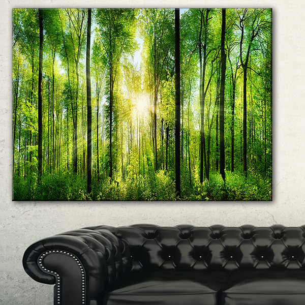 Designart Forest With Rays Of Sun Panorama Landscape Art Print Canvas