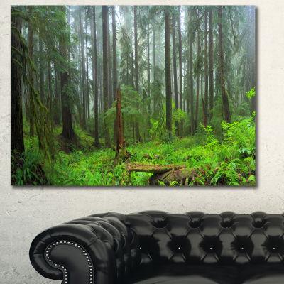 Designart Hoh Rain Forest Landscape Photography Canvas Art Print