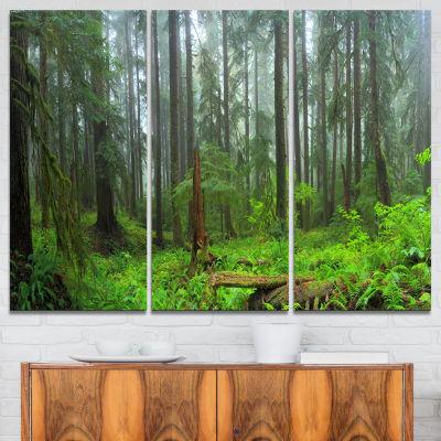 Designart Hoh Rain Forest Landscape Photography Canvas Art Print - 3 Panels