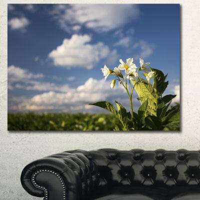 Designart Potato Plant Flowers Landscape Canvas Art Print