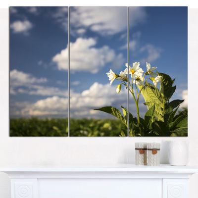 Designart Potato Plant Flowers Landscape Canvas Art Print - 3 Panels