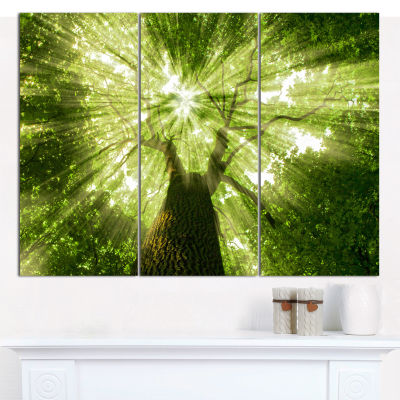 Designart Sunlight Peeking Through Green Tree Landscape Canvas Art Print - 3 Panels