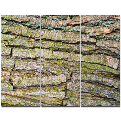 Designart Thick Tree Skin Close Up Floral Canvas Art Print - 3 Panels