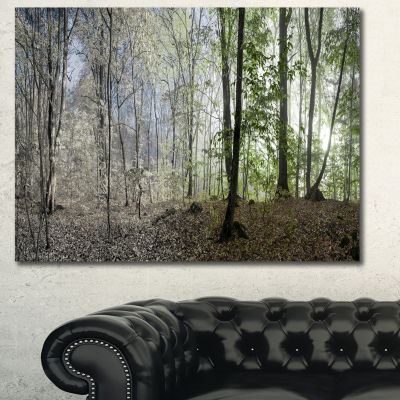Designart Green Morning In Forest Panorama Landscape Canvas Wall Art