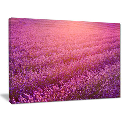 Designart Lavender Field And Ray Of Light Floral Canvas Wall Art