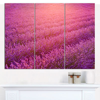 Designart Lavender Field And Ray Of Light FloralCanvas Wall Art - 3 Panels