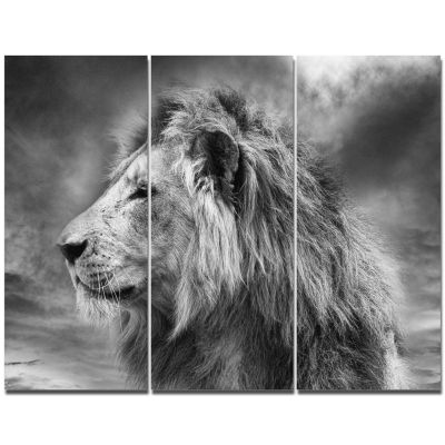 Designart Grey Wild African Lion Canvas Wall Art -3 Panels