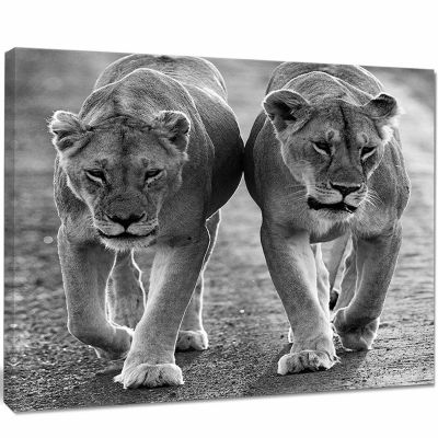 Designart Lions In Black And White Animal Photo Canvas Art