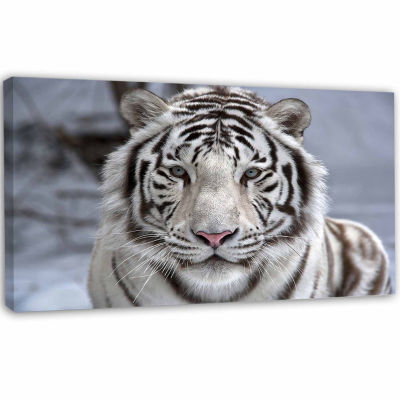Design Art Face To Face White Bengal Tiger Abstract Canvas Art Print