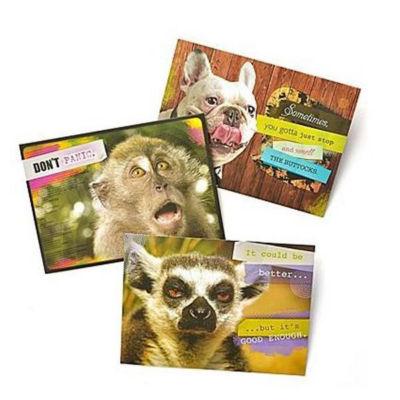 Gartner Greetings®  Pet Humor Greeting Cards, 3 pack, Blank