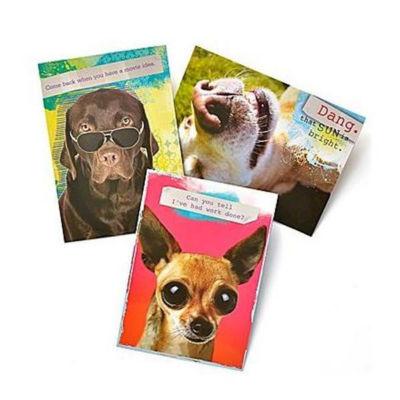 Gartner Greetings® Pet Humor Greeting Cards