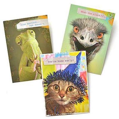 Gartner Greetings®  Pet Humor Greeting Cards 3 pack, Birthday
