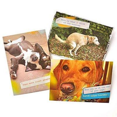 Gartner Greetings®  Pet Humor Greeting Cards 3 pack, Just For Fun