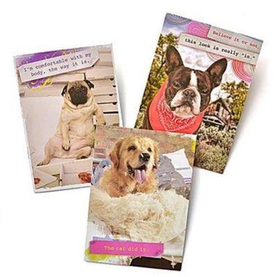 Gartner Greetings®  Pet Humor Greeting Cards, 3 pack, Just For Fun