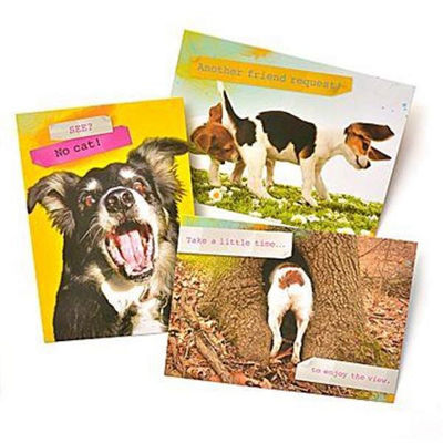Gartner Greetings®  Pet Humor Greeting Cards, 3 pack, Thinking Of You