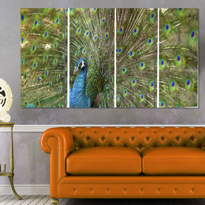Designart Beautiful Peacock with Feathers AnimalCanvas Art Print - 4 Panels