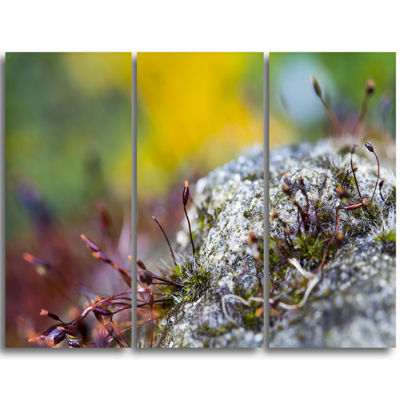 Designart Breathtaking View of Aline Forest Landscape Photography Canvas Print - 4 Panels