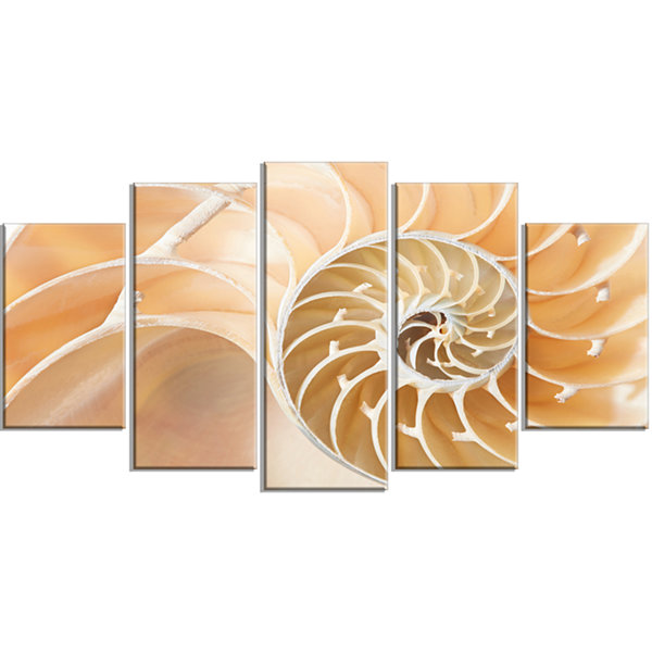 Design Art Brown Nautilus Shell Pattern Abstract Canvas Art Print - 4 Panels