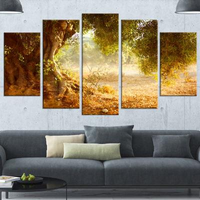 Beautiful Old Olive Tree Large Landscape Canvas Art Print - 4 Panels