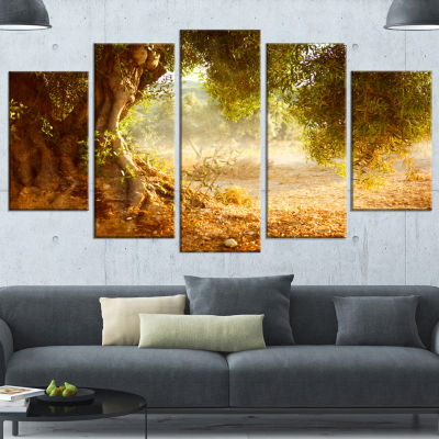 Beautiful Old Olive Tree Large Landscape Wrapped Canvas Art Print - 5 Panels