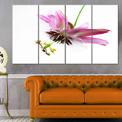Designart Passiflora Flower Over White Large Animal Canvas Art Print - 4 Panels