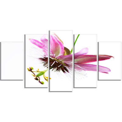 Passiflora Flower Over White Large Abstract CanvasWall Art - 5 Panels