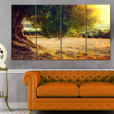 Designart Stunning Olive Trees At Sunset Large Landscape Canvas Art Print - 4 Panels