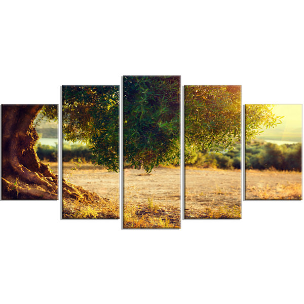 Designart Stunning Olive Trees At Sunset Large Landscape Wrapped Canvas Art Print - 5 Panels