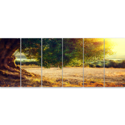 Stunning Olive Trees At Sunset Large Landscape Canvas Art Print - 6 Panels