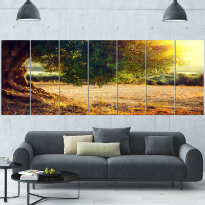 Designart Stunning Olive Trees At Sunset Large Landscape Canvas Art Print - 7 Panels