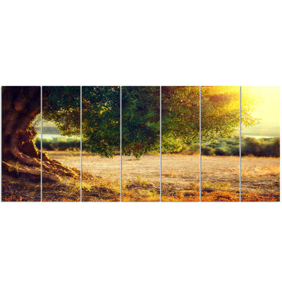 Stunning Olive Trees At Sunset Large Landscape Canvas Art Print - 7 Panels