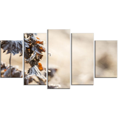 Designart Beautiful Grass Covered With Ice WhiteFloral Canvas Art Print - 5 Panels